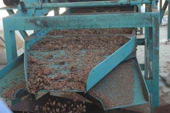 pine-nuts-process5